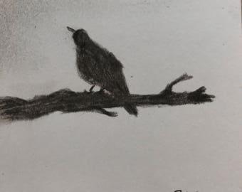 Amsel auf Ast, Kohlezeichnung auf Papier, 6,6x7,3 cm