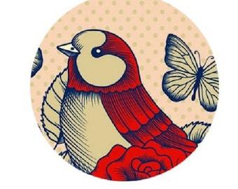 "beautiful ""love bird"", 20mm"