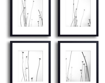 Set of 4 Prints of flower stem silhouette monochromatic