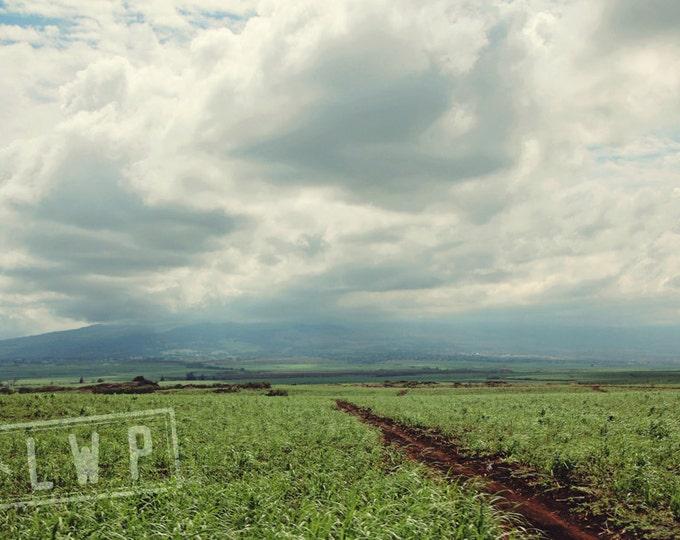 IN STOCK Morning Light, Road to Hana, Maui Hawaii Landscape, 8x12 Fine Art Photography Wall Art Home Decor