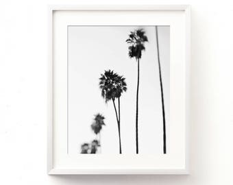 black and white palm tree photo, palm tree print, modern home decor, California dreaming, minimalist art, b&w photography, Los Angeles art