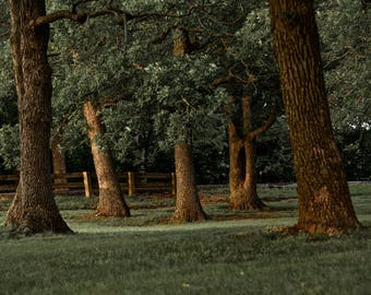 8x10 Photo Print Trees at the Lake