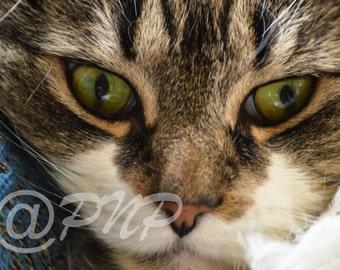 Cat Photography, Cat Eyes Photo, Fine Art Photography, Kitten Photo, Animal Photo, Nature Photography, Pet Photography, Home Decor, Wall Art