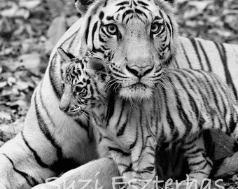 BABY TIGER and MOM Photo, Black and White Print, Baby Animal Photograph, Wildlife Photography,  Safari Nursery Art, Kids Room, Mom and Baby