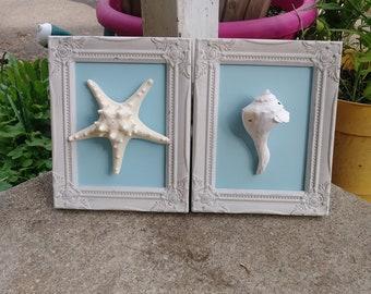 Framed Starfish and  Seashell Decor