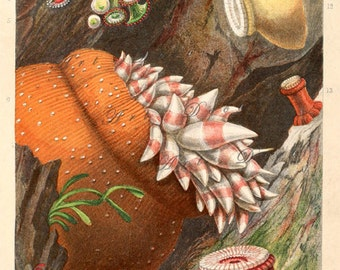 sea anemones print, a printable digital download, no. 1757