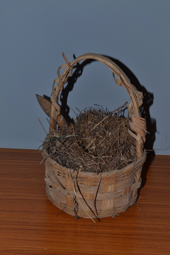 Bird Nest In Old Basket, Natural Curio Twigs Branches Woodlands, Leaves  Pine Needles Vines Abandoned Baby Bird Home Real Nature Curio Rust