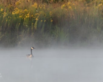 Goose on a Foggy Morning