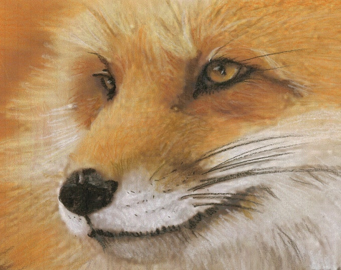 Foxy  - Original Prismacolor Drawing - Prints and Cards