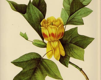 Redoute Vintage Tulip Poplar Print Poplar Tree Art Yellow Flower Print Gallery Wall Art Botanical Print Gallery Wall Art pjr 2887