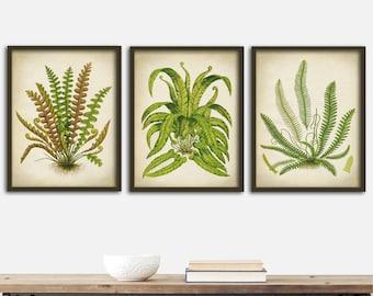 Botanical print SET of 3 art posters, fern print set, botanical kitchen decor, botanical  instant collection, ferns wall decor,  8 x 10