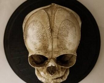 Fetal Skull Plaque