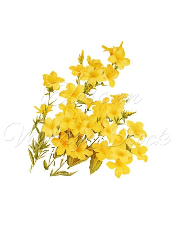 Clip Art Flowers Yellow Flowers Clipart Botanical