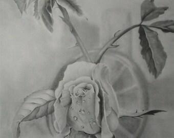 Rose Print Of Original Pencil Drawing