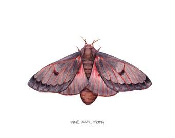 Pine Devil Moth (Citheronia sepulcralis)