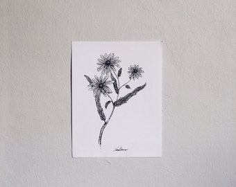 Blackeyed Susan Print (ink pen, herbal, botanical sketch)