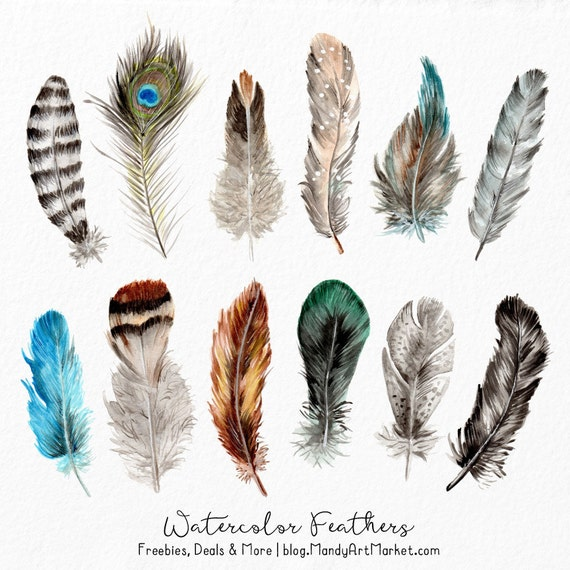 Watercolor Feathers Clipart Watercolour Feathers Hand