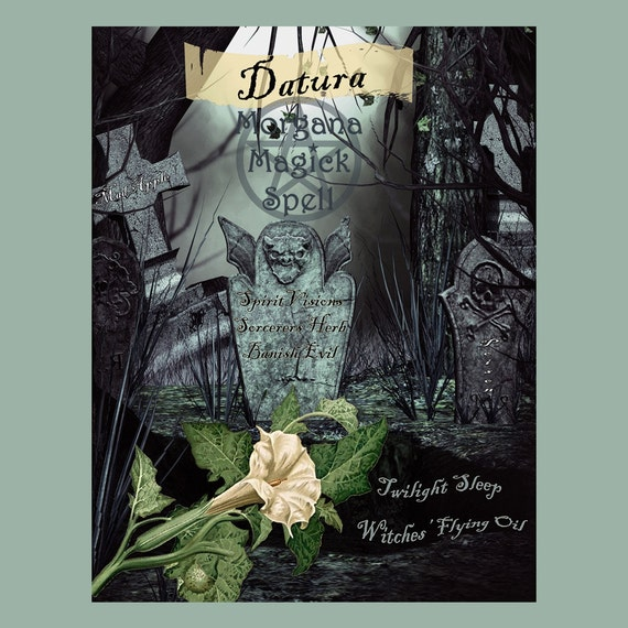 Datura the Witch's Herb