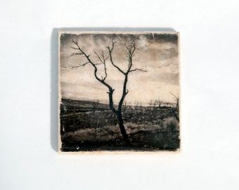 Burnt Tree Coaster (1 Stone Coaster) Black and White Nature Home Decor