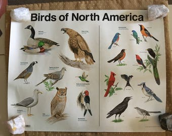 Lovely Vintage 1986 Birds of North America Teaching Aid Poster Ornithology