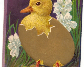 Vintage Easter Postcard, Baby Duckling Coming out of Egg, ca 1910