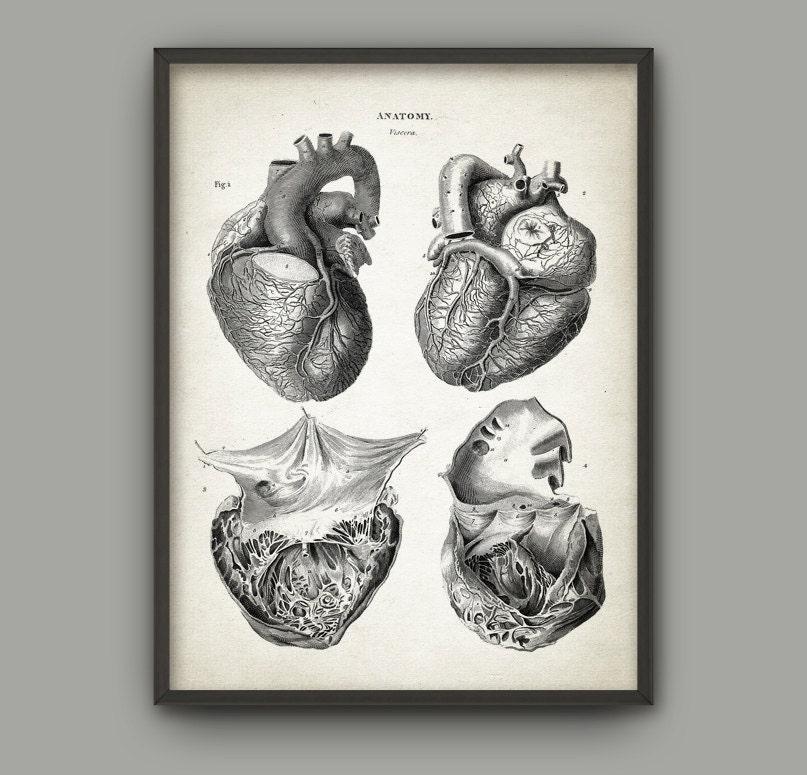 Fantástico Cartel De La Anatomía Del Corazón Ilustración - Imágenes ...