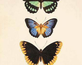 Vintage Butterfly art print Garden art print Cottage art Victorian print 1800s Antique wall art Nature wall art Home decor prints