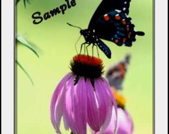 Butterfly And Purple Cone Flower Fine Art Photo Card