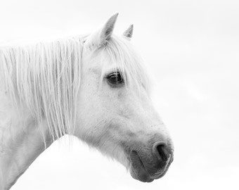 White horse photo, nursery decor, equine photo, equestrian art, large horse art, whimsical, dreamy, white, sepia, gray, ochre