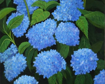 Cape Hydrangea - Giclee on canvas
