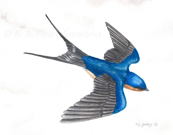 Items similar to Original Bird Art: Flying Barn Swallow ...