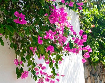 Art, Photography, Coastal, Flower Photo,Cottage Decor, Fine Art Print, Summer Art, Colorful Blooms