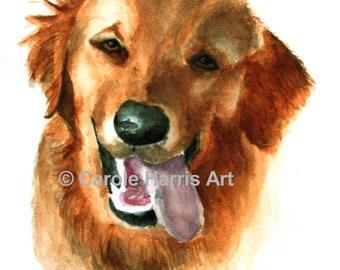 Animal Portraits Watercolor Carole Harris
