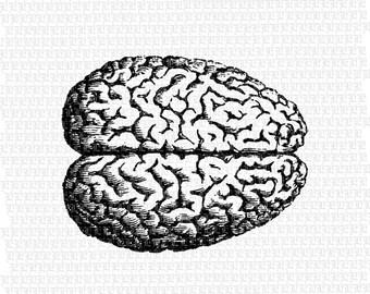Human Brain Graphic Printable Anatomy Image Digital Vintage Clip Art 2322