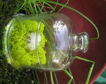 Small Bell Jar Cloche Quail Egg Bird Decor Mini Terrarium Moss Bird Nest Farmhouse Chic
