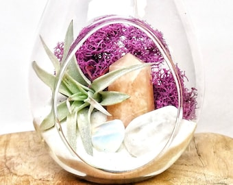 "DIY Crystal Air Plant Terrarium Kit ~ Includes 6.75"" Clear Glass Hanging Terrarium, accessories, Tillandsia Plant Gift"