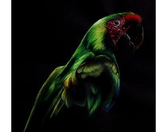 A4 Limited Edition Macaw Fine Art Print
