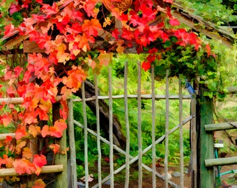 The Garden Gate Botanical Print Flowers Photo Nature Photography Ready to Frame Matted Rustic Garden