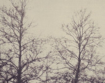 tree, nature, winter, black and white, fine art photography