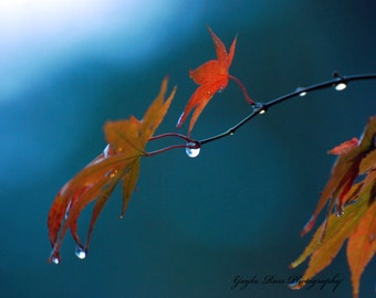 Autumn Photography,Fall Wall Art,Maple Leaf,Raindrops on leaf,Nature Photo,Raindrops on Branch,Tree Photo,Woodland,Wall Art,Botanical,