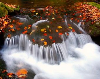 CASCADE. Waterfall, Creek, Cascade, Autumn, Leaves, Motion, Fall, Fine Art Print,  Home Decor, Art Print, Canvas Art, Wall Art.