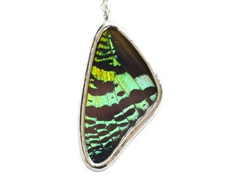 Real Moth Wing Necklace Pendant Sunset Moth Butterfly