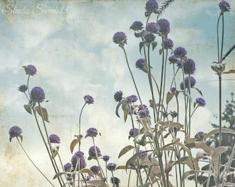 "Country Field Photo, Wildflower Art, Nature Landscape, Lavender Flower Print, Rural Summer Farmhouse Art, Home and Garden- ""Just Breathe"""