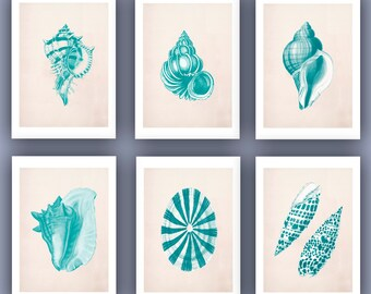 Vintage Seashells  Prints, Set of six 5x7 turquoise green prints, seashore shells, Nautical art Natural History