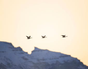 Canadian Geese Over the Sleeping Indian - Jackson Hole, Wyoming