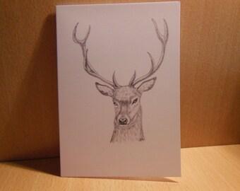 Stag Greetings Card