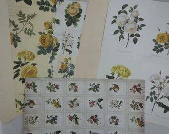"Assortment of floral papers ""botanique"" 2"