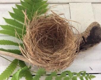Bird - Nest - Spring Birds - real bird nest - science fair - bird baby shower - Photo Prop - wildlife display - photo prop - nature crafts