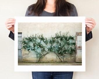 Rose garden photograph, Boboli Gardens Florence Italy photography print. Rose artwork, rose photography, Tuscany photography Tuscan wall art