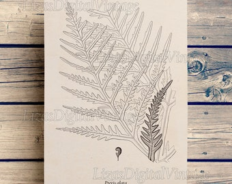 Digital download, Antique fern print, Vintage botanical art, Illustration, Instant download art, Large wall art, Printable poster, JPG PNG
